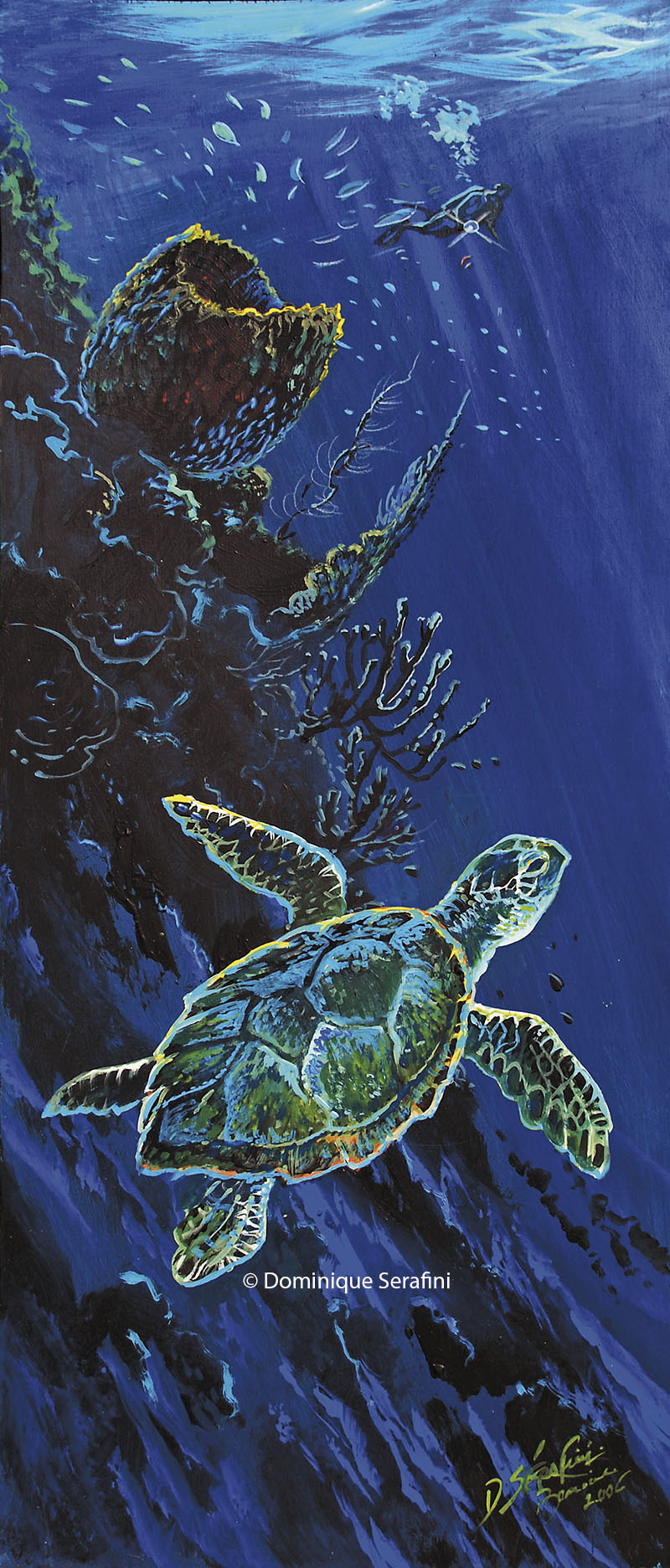 reef-wall-turtle11_B