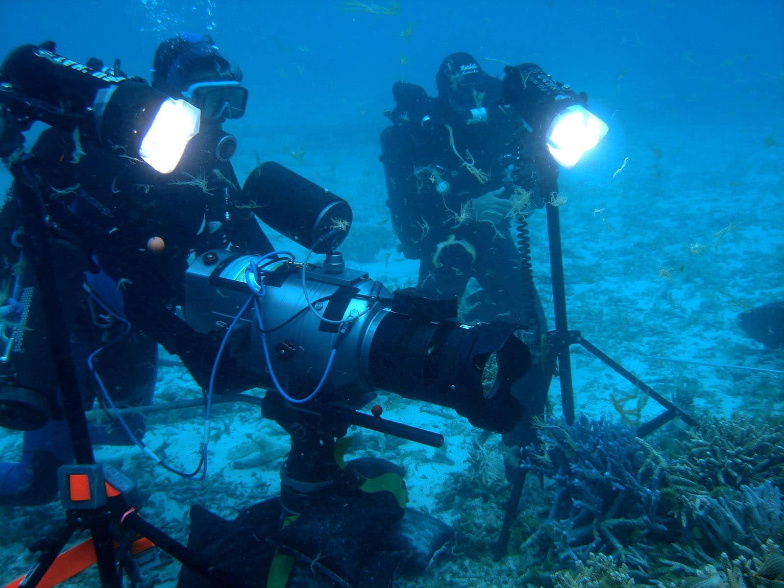 Plongée Infos Marine Vidéo En L'éclairage Sous n0wOPk